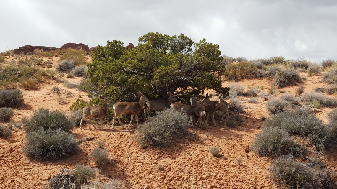 Arches Devils Garden Trail Moab Utah 26.03.162016-03-26 14.33.02