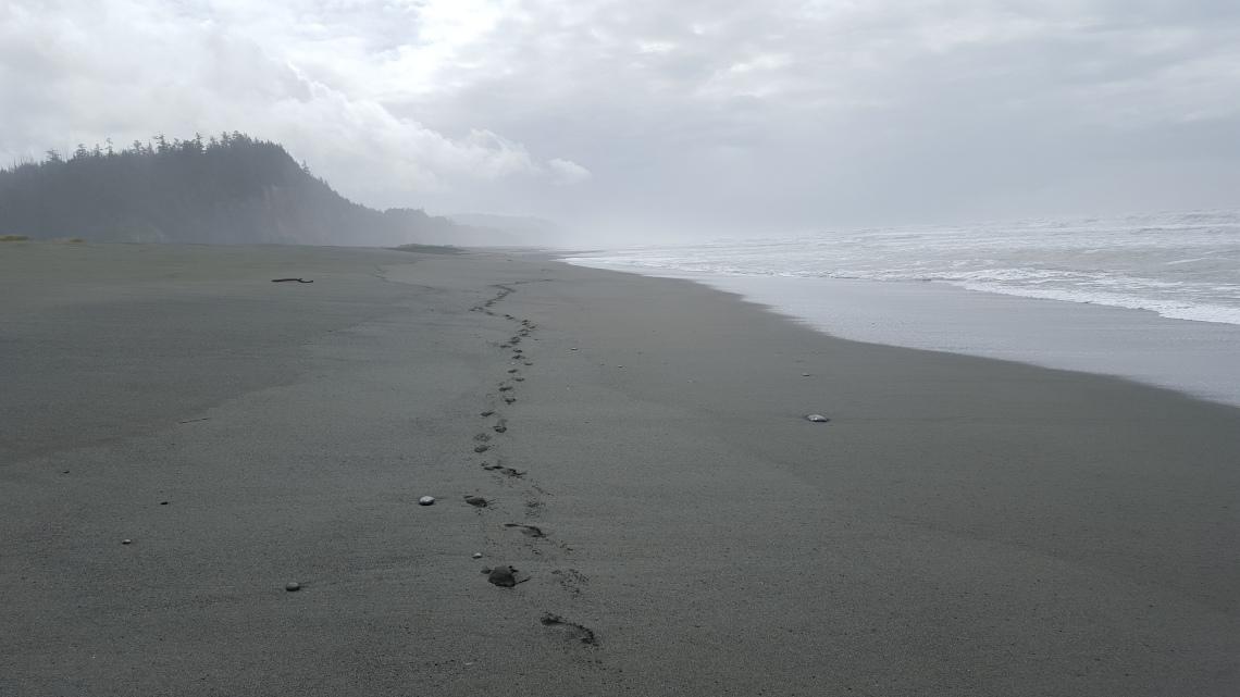 Gold Bluffs Beach Prairy Creek Redwood California 14.03.162016-03-14 13.43.12