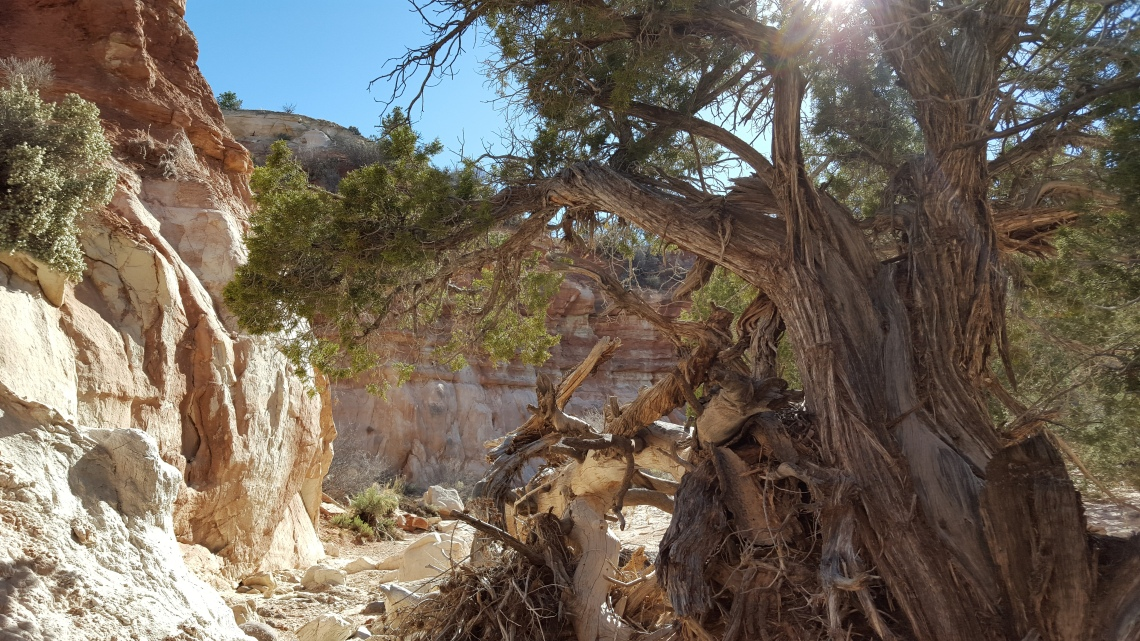 Petrified Forrest Hike Highway 12 23.03.162016-03-23 16.44.04