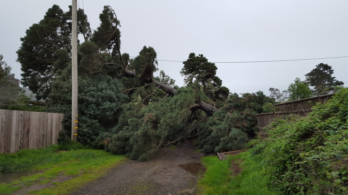 Tree Fall Bolinas 11.03.1620160311_145904
