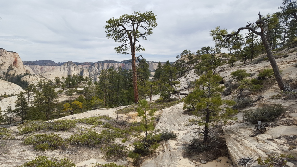 Wildcat Trail Zion National Park 21.03.162016-03-21 16.09.22