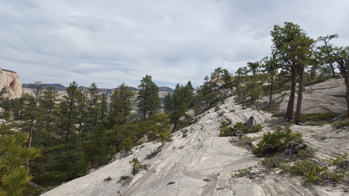 Wildcat Trail Zion National Park 21.03.162016-03-21 16.12.52