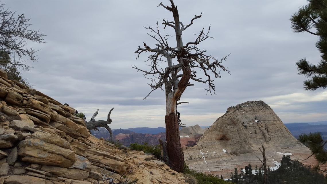 Wildcat Trail Zion National Park 21.03.162016-03-21 17.04.32