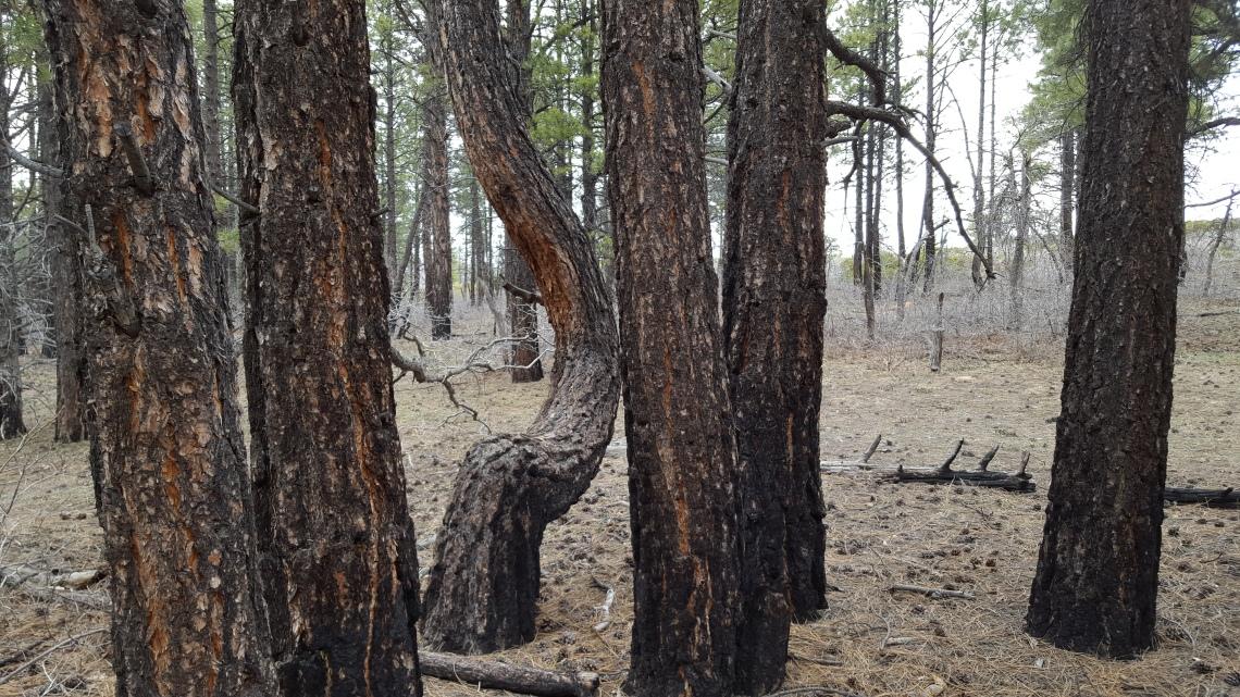 Wildcat Trail Zion National Park 21.03.162016-03-21 17.47.57