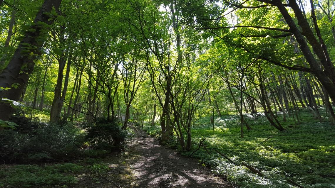 Chactonbury Ring West Sussex 26.05.1620160526_144800
