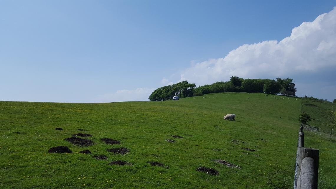 Chactonbury Ring West Sussex 26.05.1620160526_145523