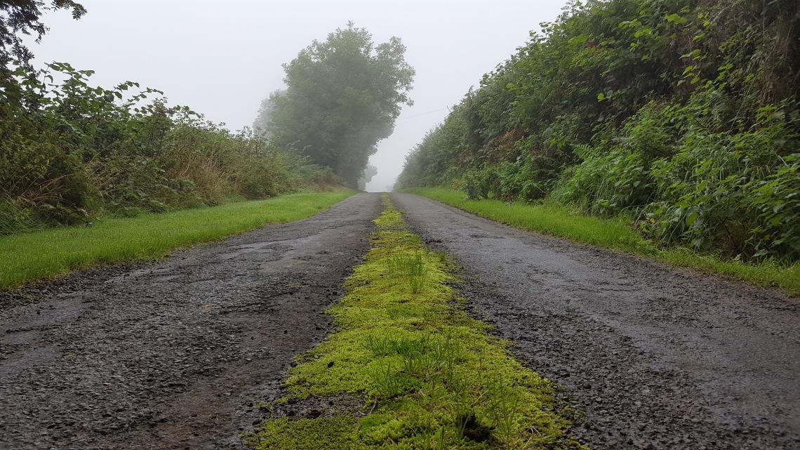 llandysill-lanes-13-09-16-jpg20160915_085934