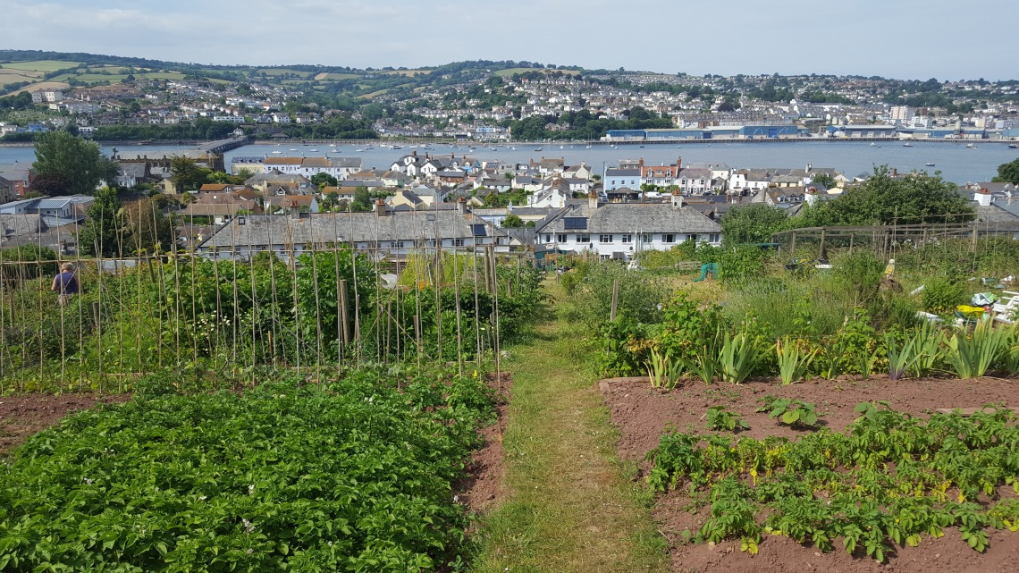Allotment Shaldon 23.06.1820180623_162003 copy
