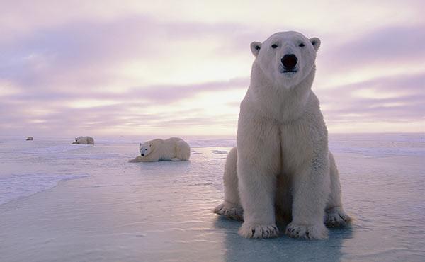 PolarBear-