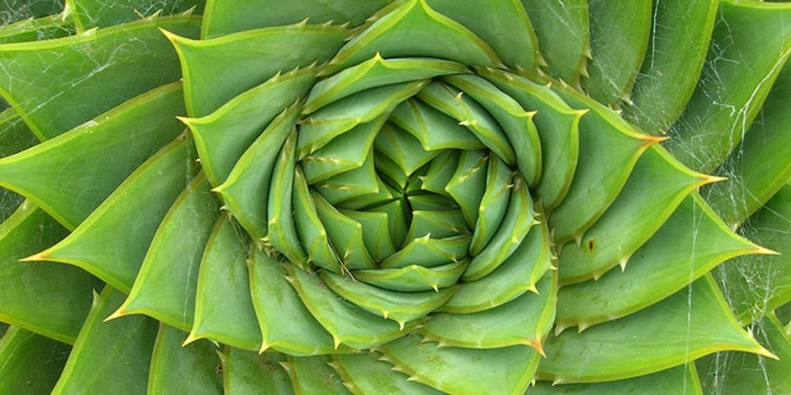 fibonacci 2